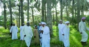 بدء طناء ثمار النخيل بقرية الفيقين بولاية منح