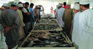 انخفاض أسعار الأسماك بسوق قريات