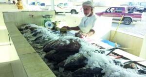 وفرة في الأسماك بعدد من أسواق السلطنة .. والأسعار مستقرة