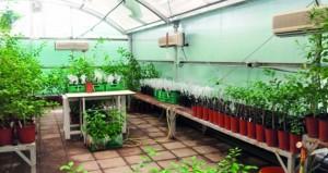 """""""الزراعة"""" تنفذ مشروع إكثار وإنتاج الحمضيات الخالية من الأمراض"""