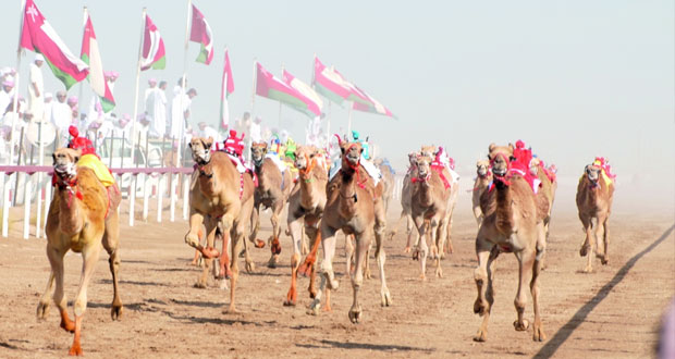 اختتام مهرجان الأبيض الثامن لسباقات الهجن بولاية المضيبي