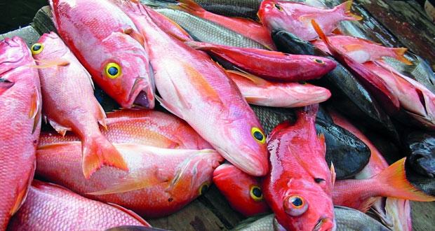 انخفاض أسعار الأسماك في عدد من أسواق السلطنة