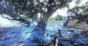 الأيدى العابثة تطال المرافق العامة وتحرق أشجارا معمرة بالجبل الأخضر