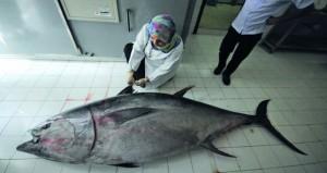 في إنجاز علمي للسلطنة.. تسجيل وتصنيف وجود سمكة التونة الزرقاء في مياه بحر عمان