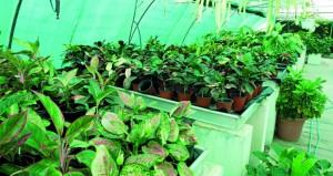 النباتات المنزلية السامة .. خطر على الانسان والحيوان إذا لم يحسن التعامل معها والقراءة عنها