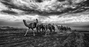 مصورون عمانيون يحققون مراكز متقدمة في مسابقة التصوير الضوئي بالهند