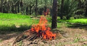 ظاهرة حرق المخلفات الزراعية بقرى ومناطق الرستاق .. تبحث عن حل ؟!
