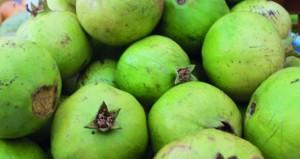 طرح أول محصول لثمار رمان الجبل الأخضر بسوق نـزوى
