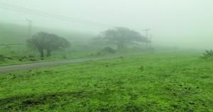صلالة .. ترحال عشاق الجمال والطبيعة الخضراء وسط الضباب والرذاذ