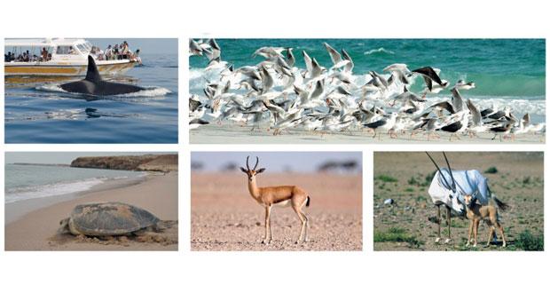 """صحيفة """"لونيلي بلانت"""" اللندنية: السلطنة من أكثر بلدان المنطقة ثراءً في تنوع الحياة البرية"""