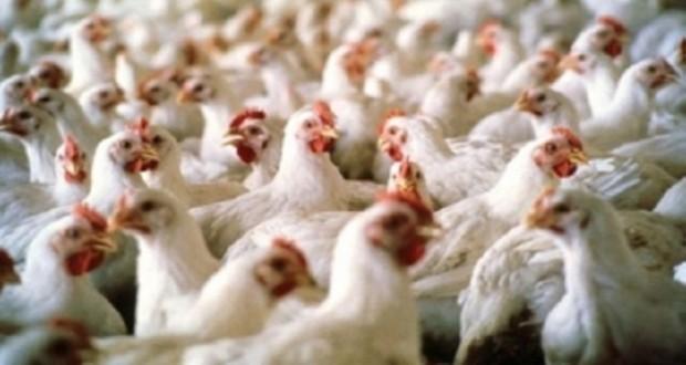 حظر استيراد الطيور الحية بعدد من الدول