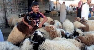 القوات العراقية تلقي منشورات على (الحويجة) آخر معاقل داعش
