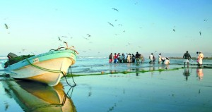 104.8 مليون ريال عماني قيمة الأسماك المنزلة بالصيد الحرفي