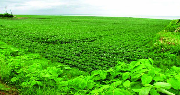 إطلاق مشاريع عربية لاستزراع الأراضي الجافة والقاحلة والصحراوية