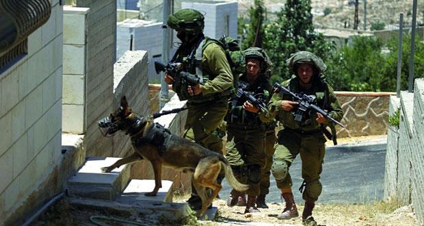 الاحتلال يطلق كلابه على الفلسطينيين ويعتقل العشرات بمداهمات في الضفة