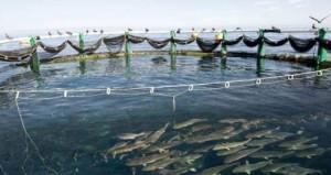 (المختبرات) تتوج بـ(70) مبادرة سمكية توفر 8 آلاف وظيفة باستثمارات مليار ريال