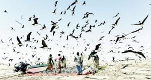 152.8 مليون ريال عماني قيمة الأسماك المنزلة بالصيد الحرفي بنهاية الربع الثالث من العام الجاري