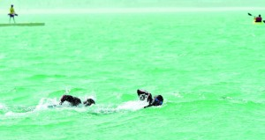 اليوم انطلاق منافسات بطولة خصب الأولى للسباحة في المياه المفتوحة