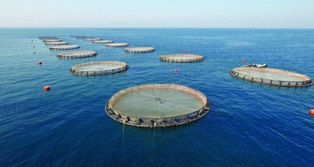 تدشـين المرحلة الأولى من مشـروع الاسـتزراع السـمكي بقريات بتكلفة 3 ملايين ريال عماني