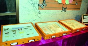متحف التاريخ الطبيعي ينظم معرضا تعريفيا للفراشات العمانية