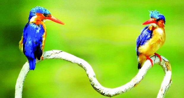 """عدسة المصور العماني تسرد تفاصيل """"الحياة الفطرية و الطيور المهاجرة"""" في معرض فني بصلالة"""