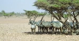 مكتب حفظ البيئة بديوان البلاط السلطاني يفتح المجال للزوار للاطلاع على محمية الكائنات الحية والفطرية بالوسطى