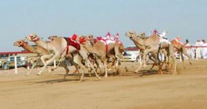غدا .. الثلاثاء انطلاق فعاليات السباق العام للاتحاد العماني لسباقات الهجن بدعم من شركة اوكسيدنتال عمان بميدان الأبيض لسباقات الهجن