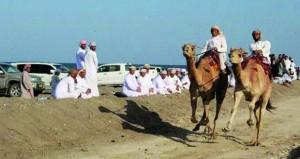مشاركة 950 ناقة ختام فعاليات سباق العرضة للجمال بميدان شرس الهدادبة بالمصنعة