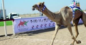 تنافس وإثارة وقوة حاضرة في ثاني أيام السباق العام الذي يقيمه الاتحاد العماني لسباقات الهجن بدعم من اوكسيدنتال عمان بميدان الأبيض بالمضيبي