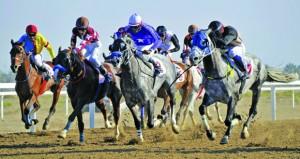 ثمانية أشواط يشهدها السباق ستة للخيول العربية وشوطان للمهجنة