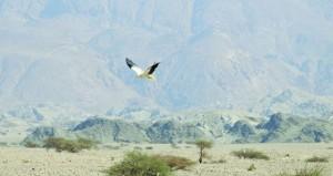 بشهادة الخبراء .. السلطنة تمثل موطنا حصيناً للعديد من الحيوانات والطيور المعرضة للانقراض