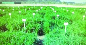 توثيق بيانات (374) صنفا نباتيا محليا من النخيل والحمضيات والأمبا
