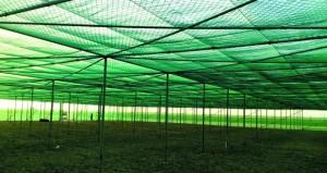 السلطنة تنشئ أكبر مزرعة نخيل عضوية .. والإنتاج 10 آلاف طن تمور سنويا