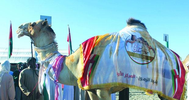 حفلة عمان تخطف المركز الأول في شوط التلاد وسلهود يتوج بالمركز الأول في شوط الزمول