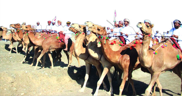 انطلاق فعاليات مهرجان (النعيمي) الـ 18 لعرضة الهجن والخيل بميدان سيح الطيباب بصحم