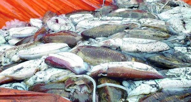 انتهاء موسم صيد الحبار في مياه السلطنة الأسبوع القادم