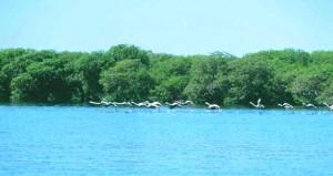 """""""محمية الأراضي الرطبة"""" بمحوت منتجع سياحي لمحبي الطبيعة وهواة مراقبة الطيور والحياة الفطرية"""
