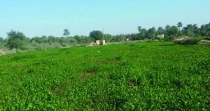 أهالي عبري يطالبون بإنشاء مركز للتسويق الزراعي في أسواق الولاية