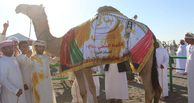 مهرجان حمراء الدروع الرابع لمزاينة الإبل يواصل فعالياته ويختتم يومه الرابع على التوالي بنجاج وتألق