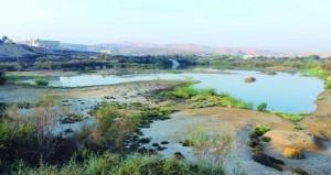 بحيرات الأنصب 293 نوعا من الطيور المحلية والمهاجرة