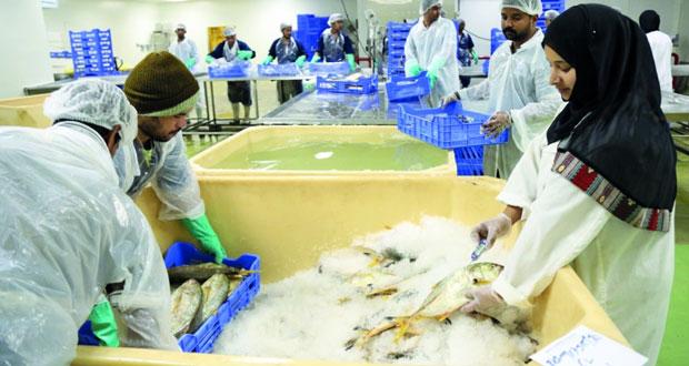 23.5 مليون ريال عماني مبيعات شركة الأسماك العمانية خلال العامين الماضيين