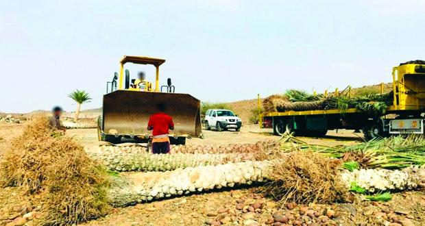 «الزراعة» تضبط شاحنة تنقل فسـائل نخيل مصابة بالسـوسـة الحمراء