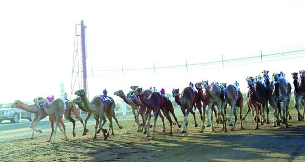الاتحاد العماني لسباقات الهجن ينظم السباق السنوي بميدان صحار بمحافظة شمال الباطنة