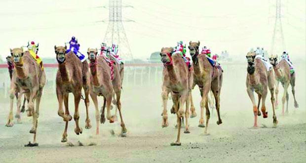 انطلاق السباق السنوي للهجن بصحار الاثنين المقبل