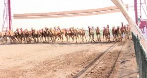 انطلاق السباق الختامي لكأس جلالته للهجن بمضمار الفليج ببركاء بـ 15 شوطا