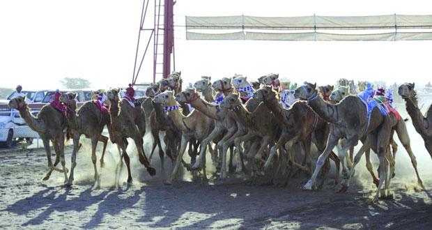 تواصل فعاليات السباق الختامي لكأس جلالة السلطان المعظم لسباقات الهجن الأهلية لليوم الثالث على التوالي بمضمار الفليج ببركاء