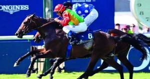 الحصان نفيس للخيالة السلطانية يشارك السبت في كحيلة كلاسيك بدبي