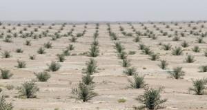 تـأسيس شركة قابضة للتمور في إطار مشروع زراعة المليون نخلة