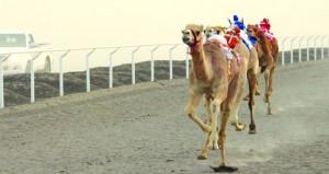 نادر آل سعيد يرعى حفل ختام سباق الهجن الفطايم بميدان البطحاء بولاية المضيبي