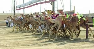 (طواري) للحوسني تهدي أبناء السلطنة والرياضة العمانية إنجازا جديدا وتفوز بـ (الشلفة) في مهرجان سباقات الهجن بدولة قطر